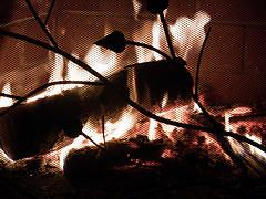 Fireplace Lifeline