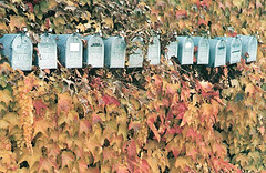 Mailboxes in Ivy